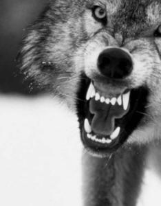 -Wolf