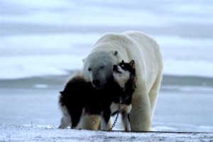 polar-bear-dogs-1